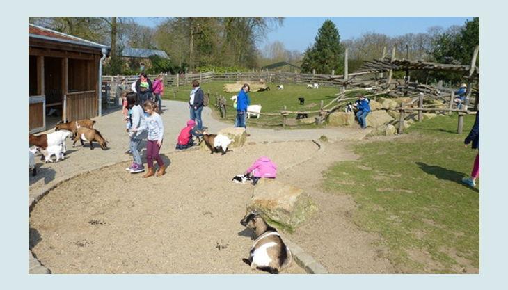 naturzoo rheine streichel zoo