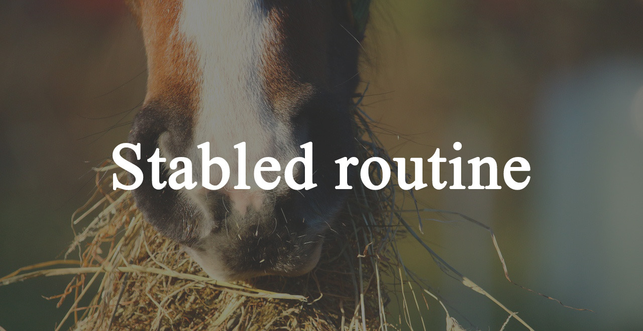 Stabled routine