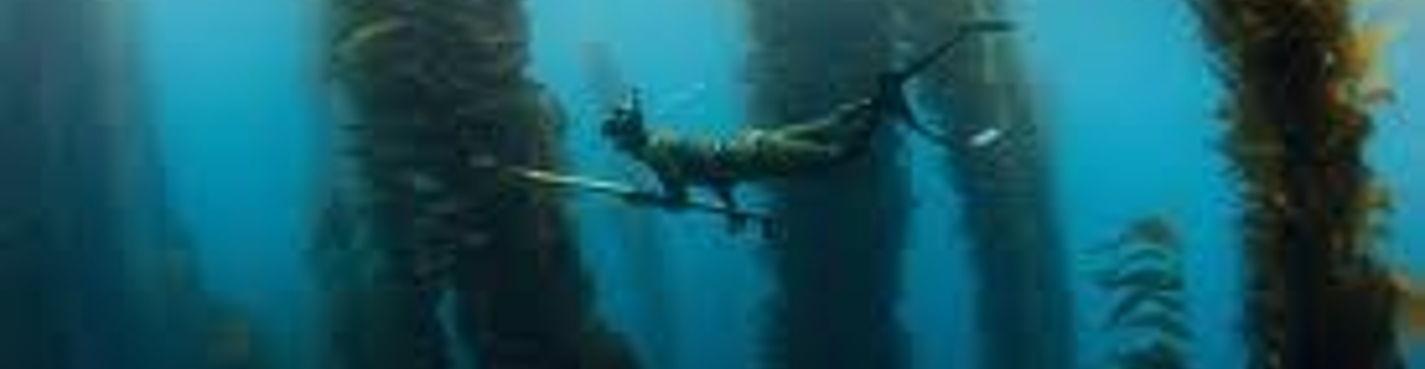 Подводная охота с гарпунами на Косумеле