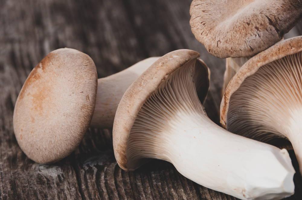 King Trumpet mushroom on table