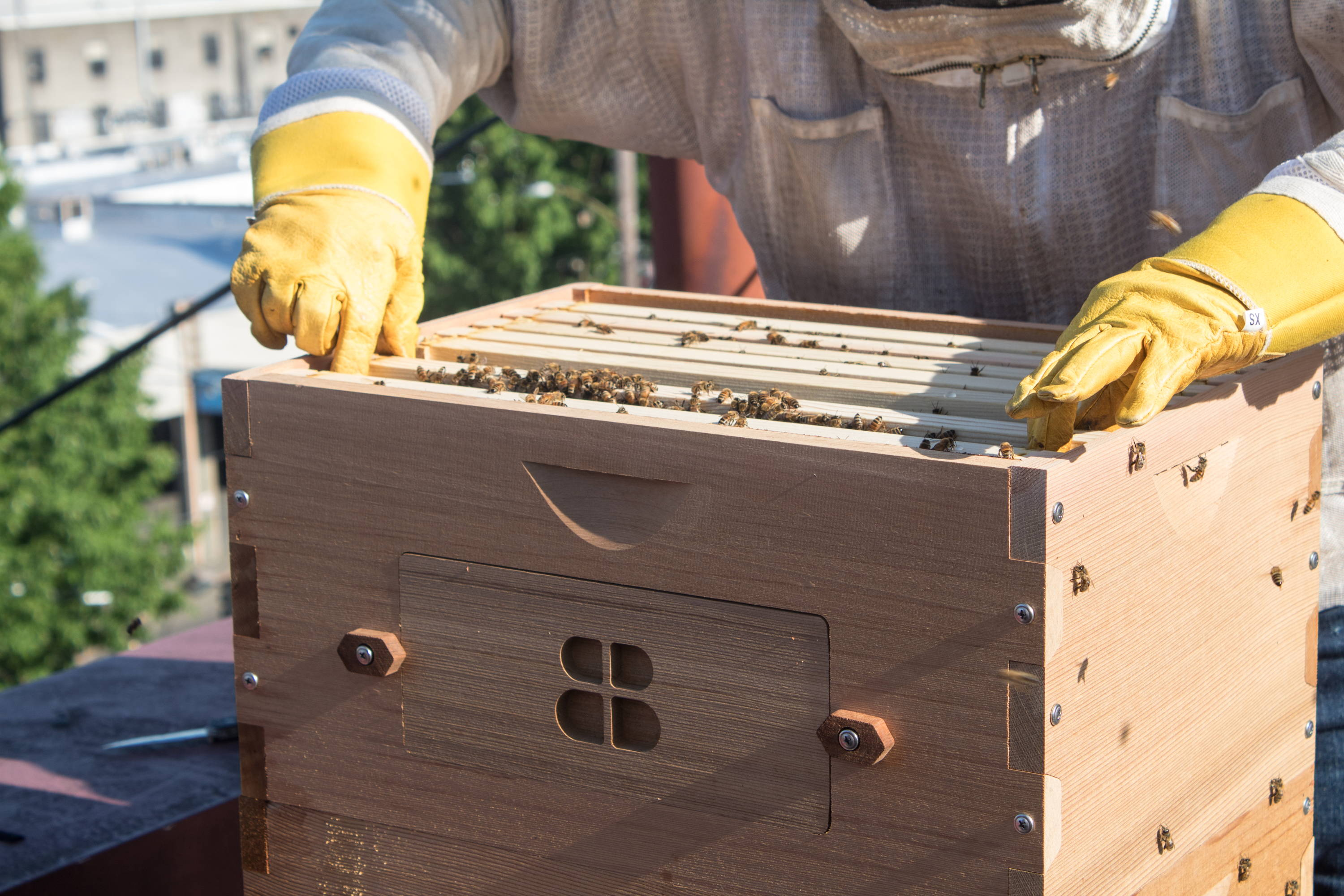 A Beekeeper with a Bee Built Langstroth hive.