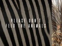 صورة PLEASE DON'T FEED THE ANIMALS FRIDAY BRUNCH