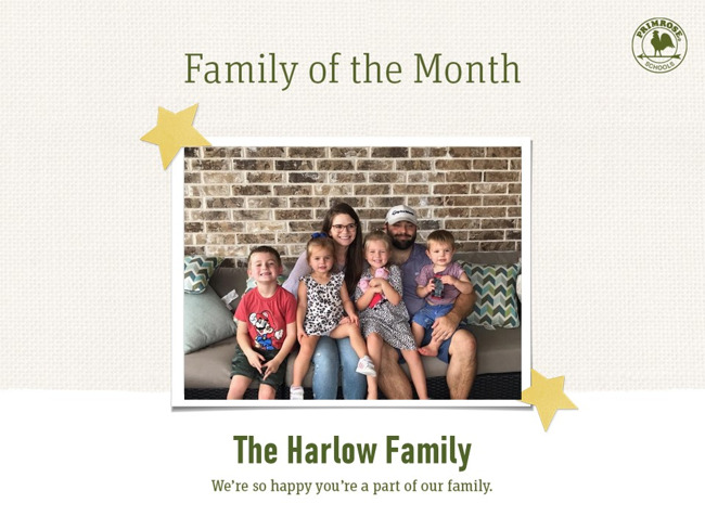 Primrose harmony family of the month
