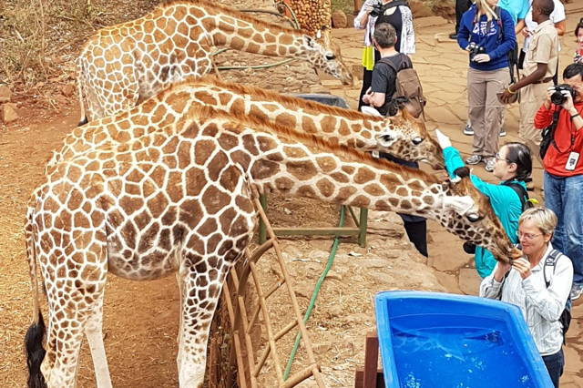 Giraffe Center & David Sheldrick Elephant Orphanage