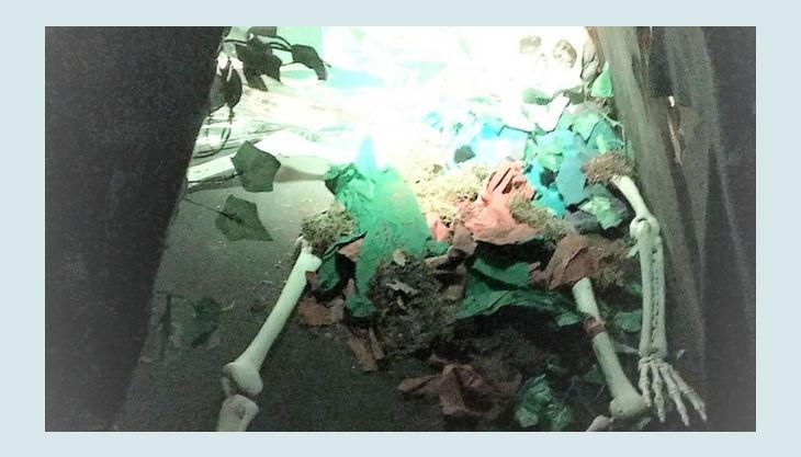 bg pit pat wonderland escape room dschungel skelett