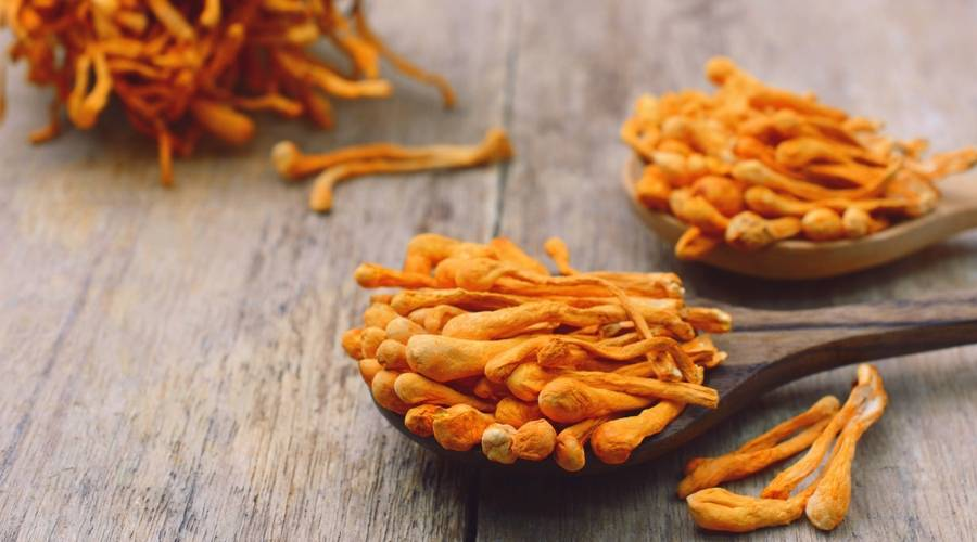 cordyceps-mushrooms
