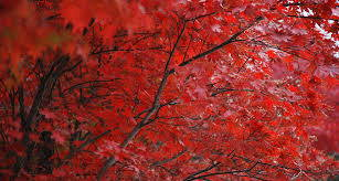 Red color in  Nature