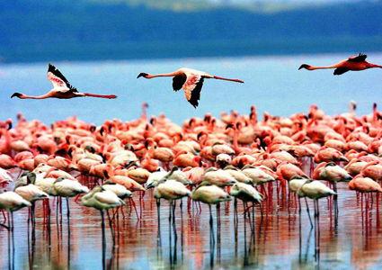 tanzania-a-wildlife-paradise