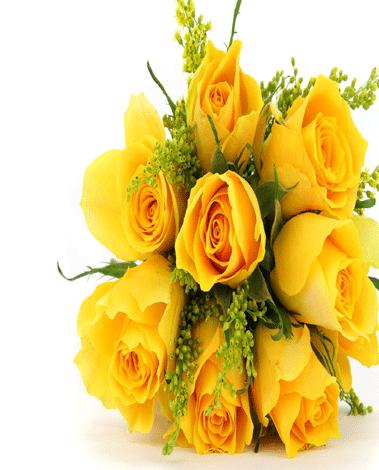 hf Dozen Yellow Roses