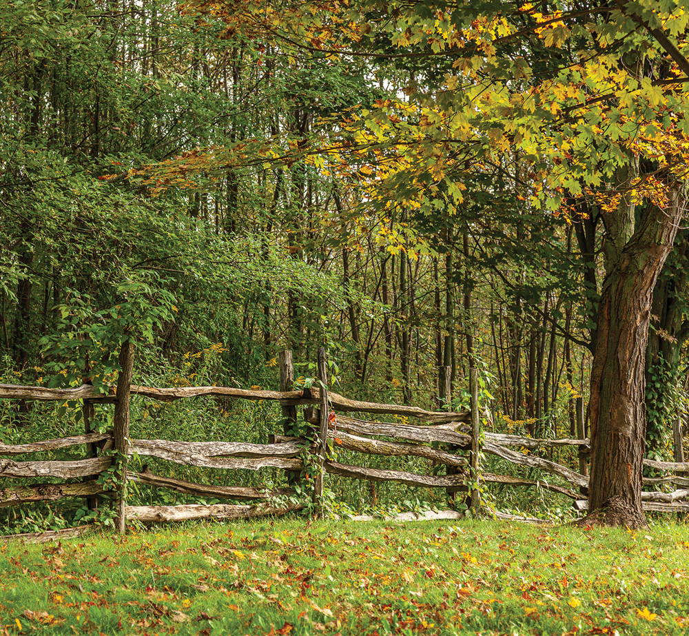 A photograph of the crafted wooden fence around the Smith family farm. Behind the fence is a forest of trees.