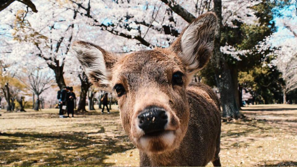 Zen deeply respects nature