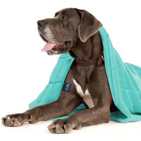 Calming Pets aqua cotton weighted blanket for a small dog