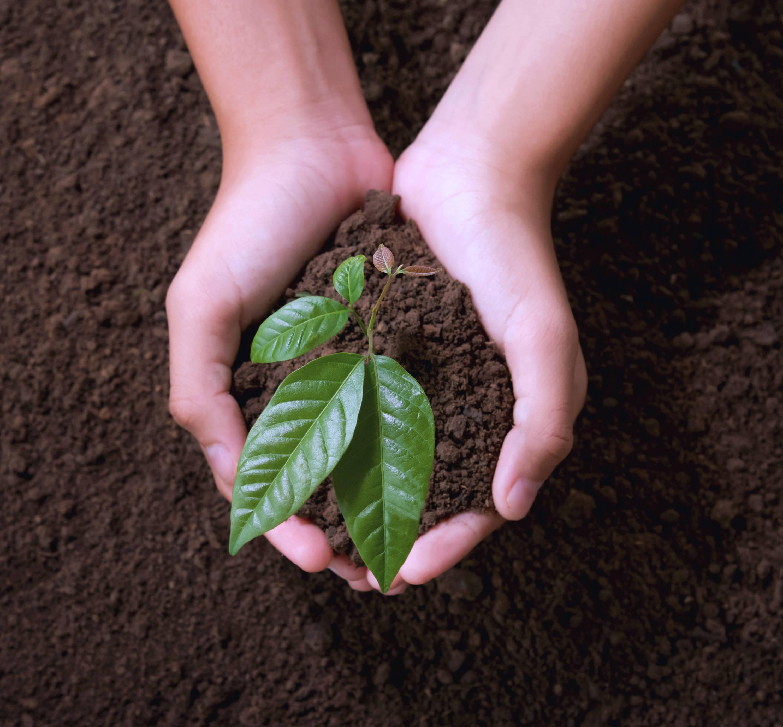 organic sustainable organic ingredients organic skincare cosmetics beauty certified organic