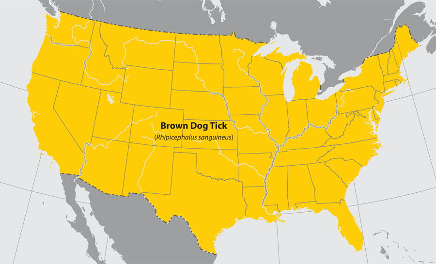 american dog tick map of the states