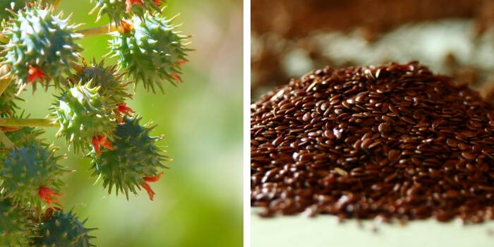 Castor oil and Flaxseed oil