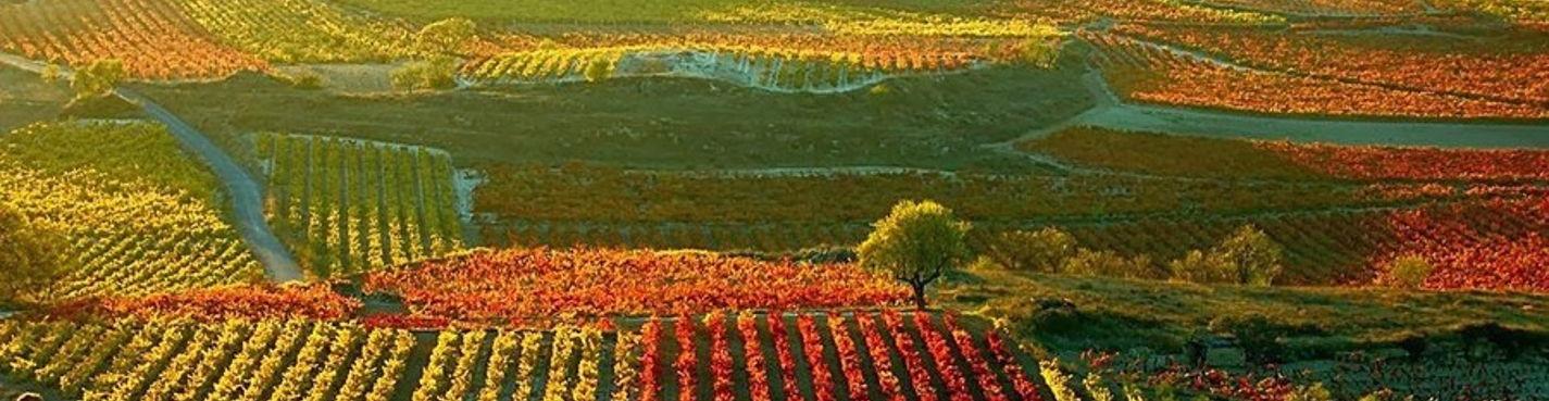 Рибера дель Дуэро и Риоха — визитная карточка испанских вин