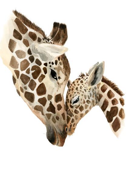 "Постер ""Жирафа мать и жирафенок"""