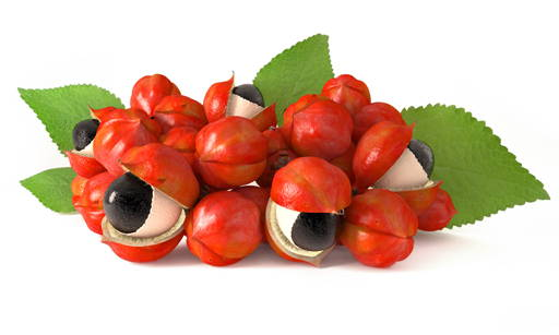 Guarana Enhances the action of caffeine, prevents the process of fat accumulation in cells