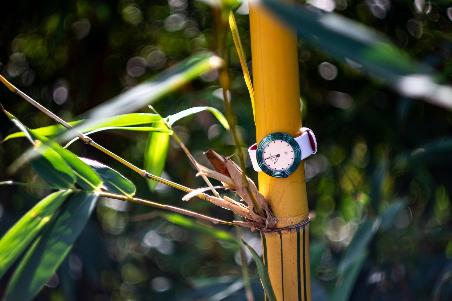 White and Green Streamliner wrapped around a bamboo tree
