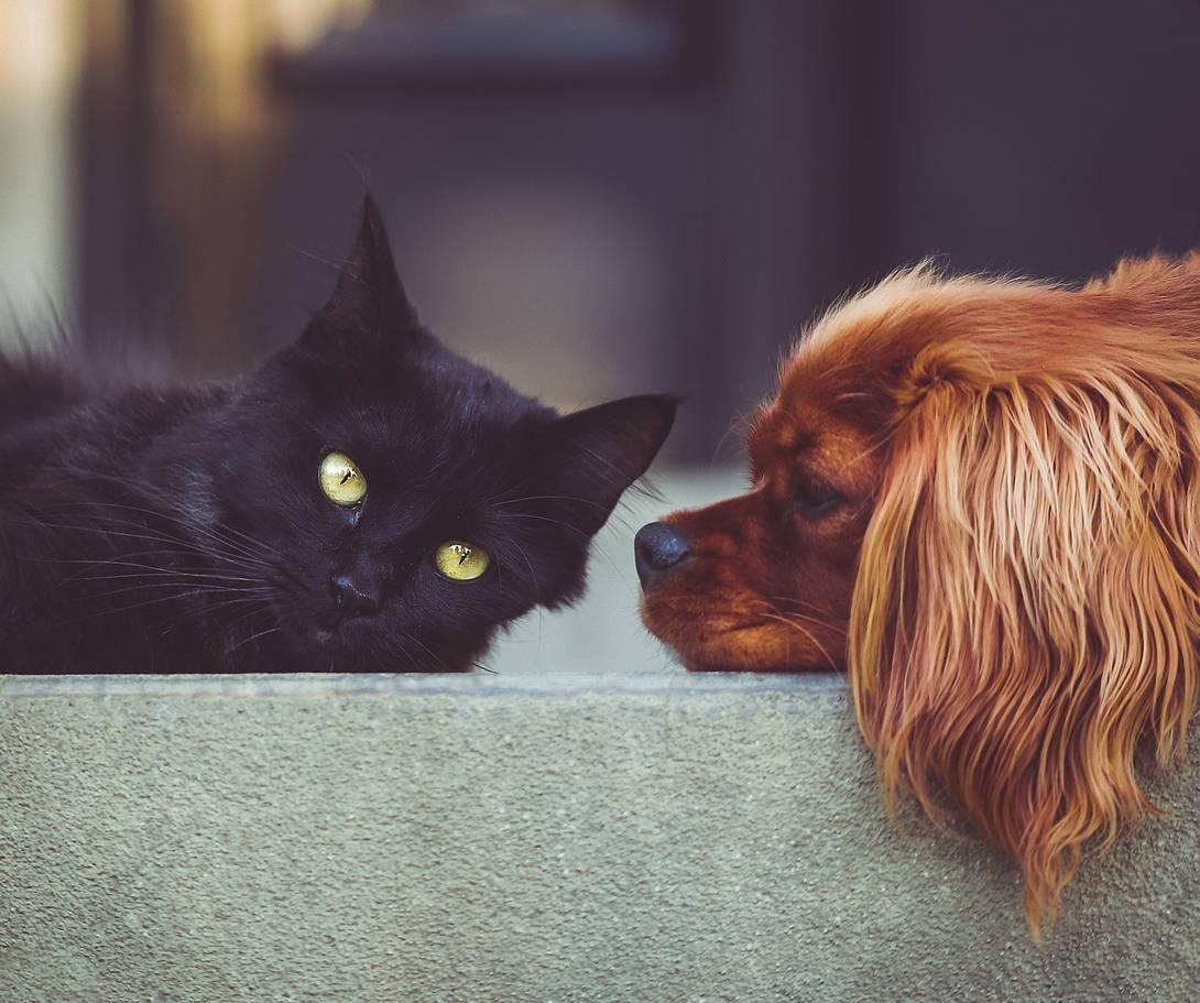 Kokzidien bei Hund und Katze - Titelbild