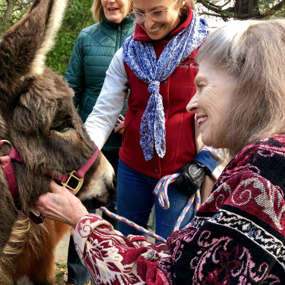 A Caring Cowgirl session with mini horses