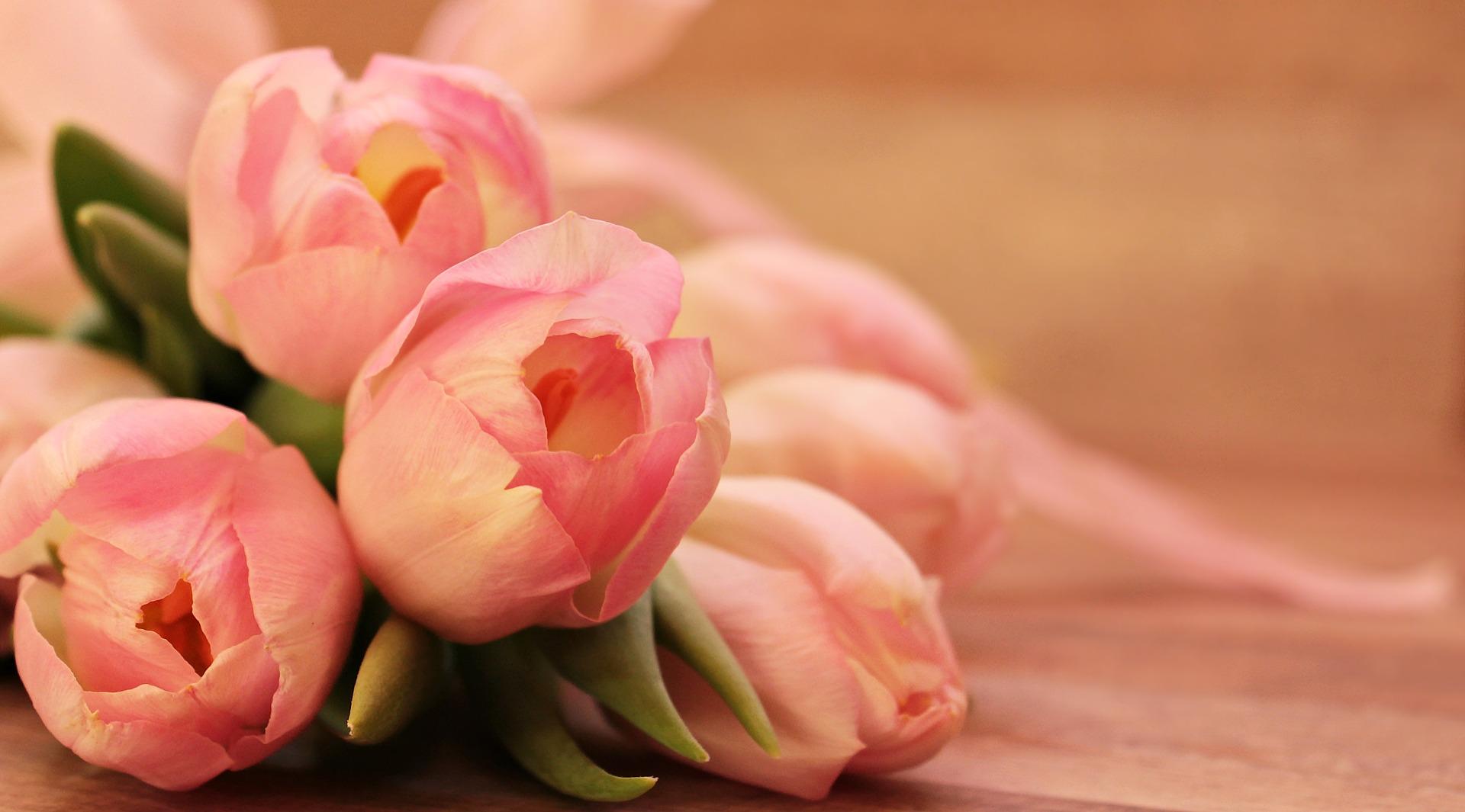 Tulips 2068692 1920 9w3vu