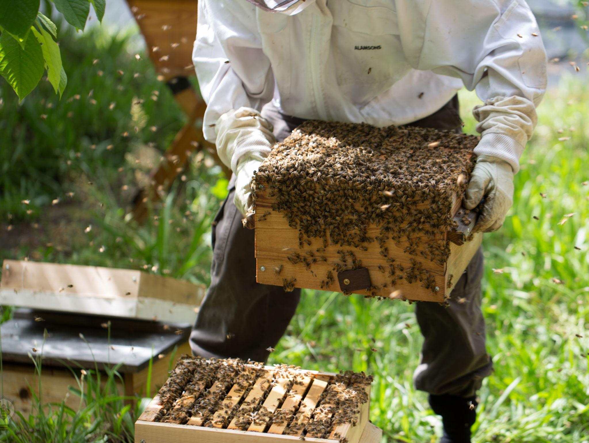 beekeeping for beginners bee built