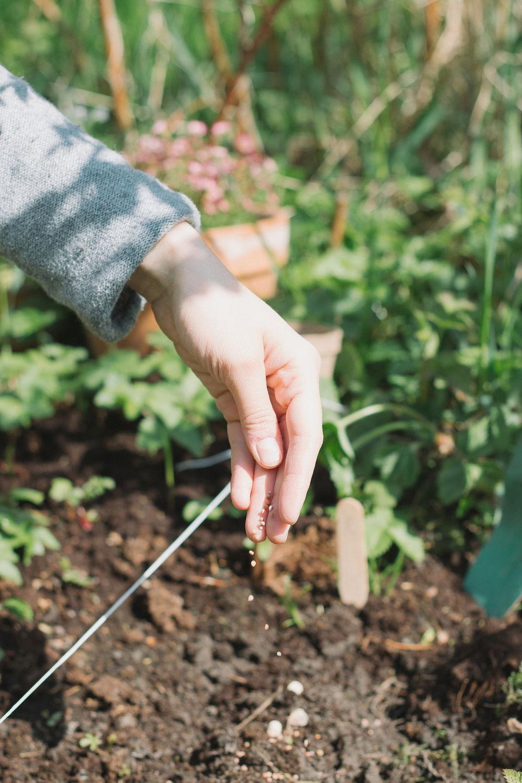 Thisispaper_Gardening_15.jpg