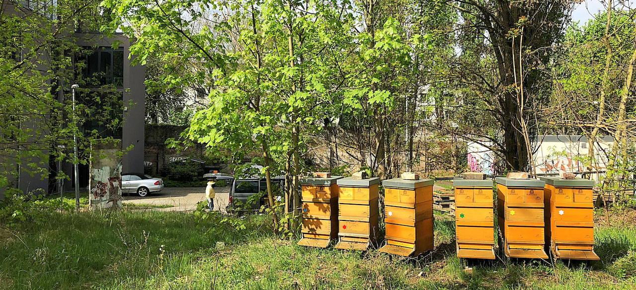 Sechs Bienenvölker am Standort beim Nordbahnhof in Berlin Mitte