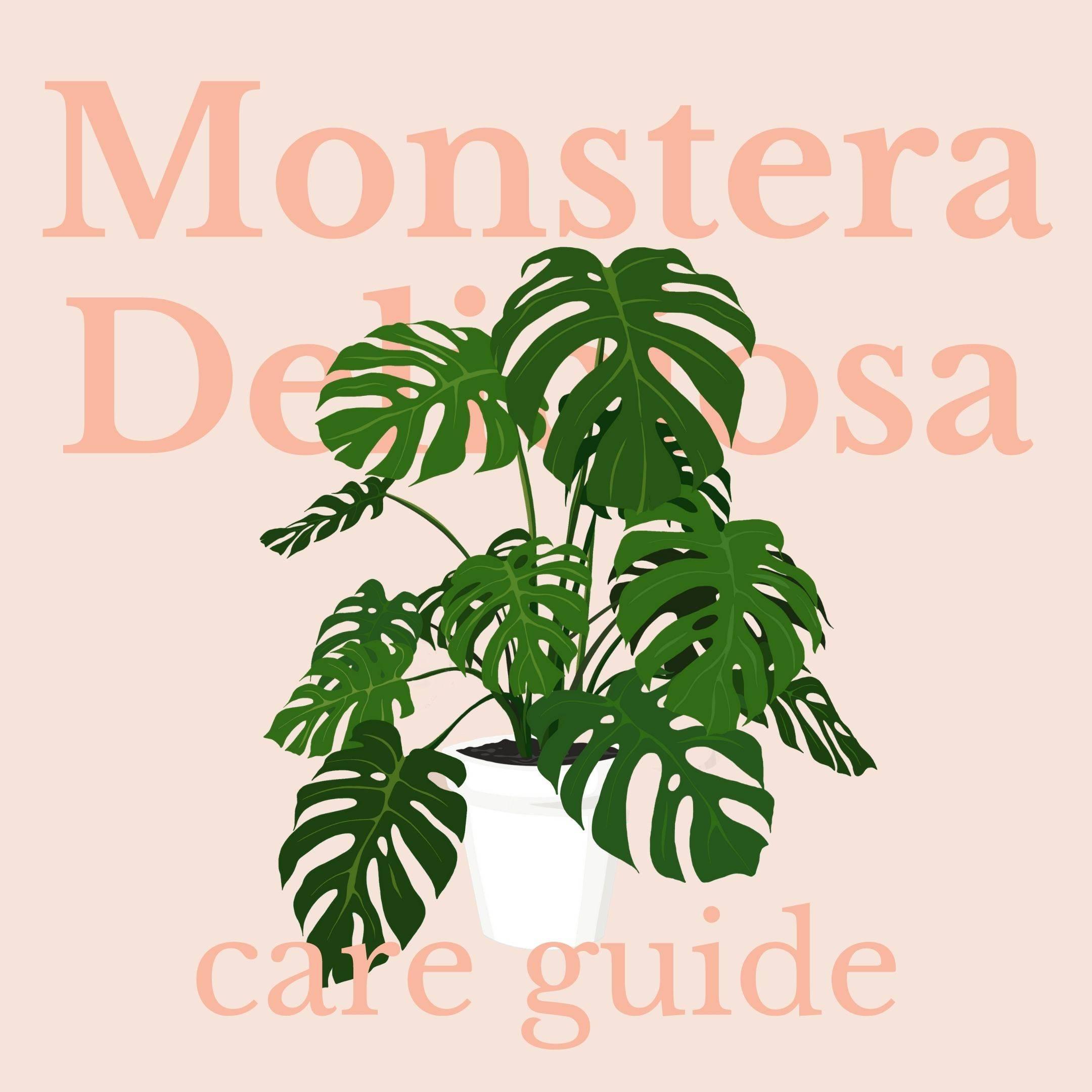 Drawing of monstera deliciosa