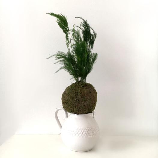 """Кокедама с растением Аспарагус Перистый """"Koka Aspa"""""""