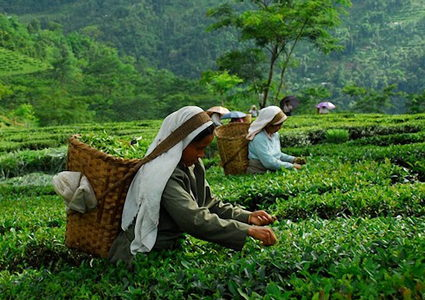 joy-at-glenburn-tea-estate-darjeeling