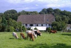 bauernhof gut halfeshof a kühe auf weide vorm hof