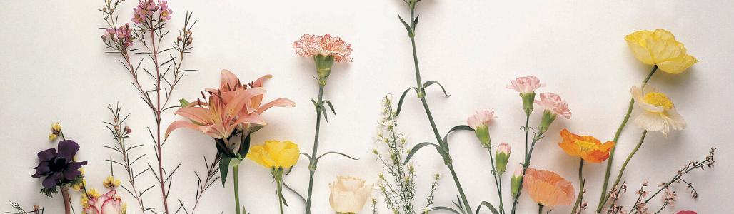 Field bouquets