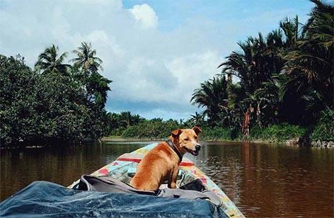 Hund Regenwald