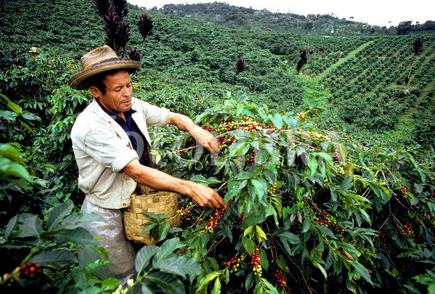 Columbia Coffee Region