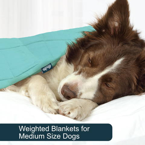 Weighted blankets for medium dogs