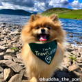 Buddha Travel Dog Instagram Page