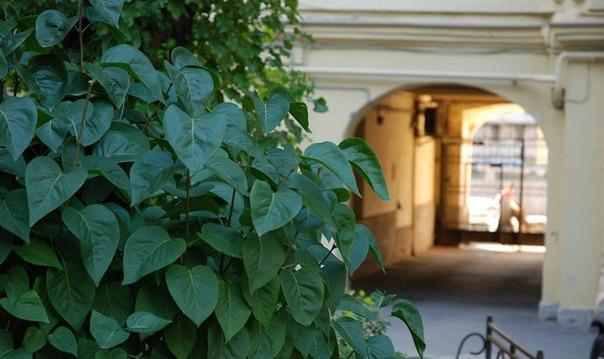 Примечательные дворы Петербурга