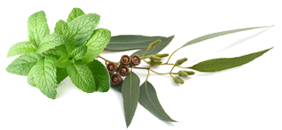 Peppermint Eucalyptus Snough