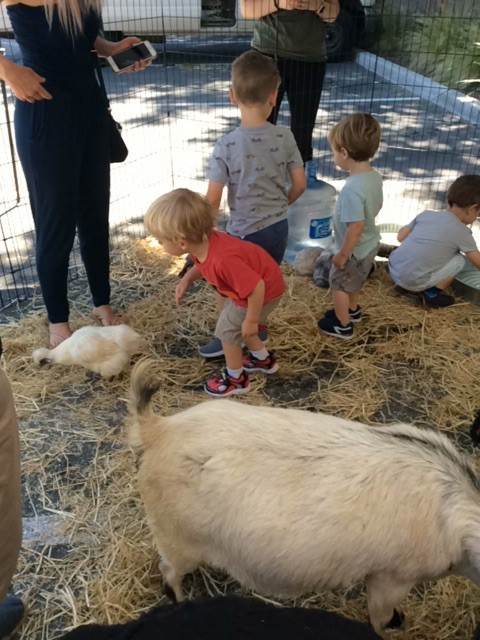 petting zoo at school