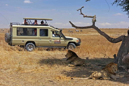 Nairobi National Park Safari Tour (4X4 Land Cruiser)