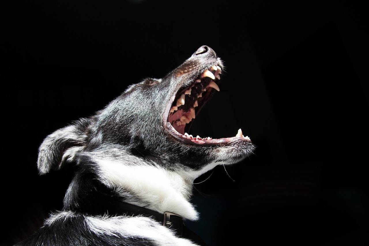 Der Hund hat Mundgeruch - gesunde Gebiss- und Zahnpflege - Titelbild