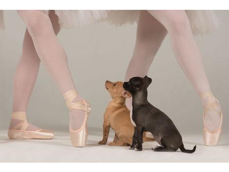 Louisville Ballet's 2018-2019 Season