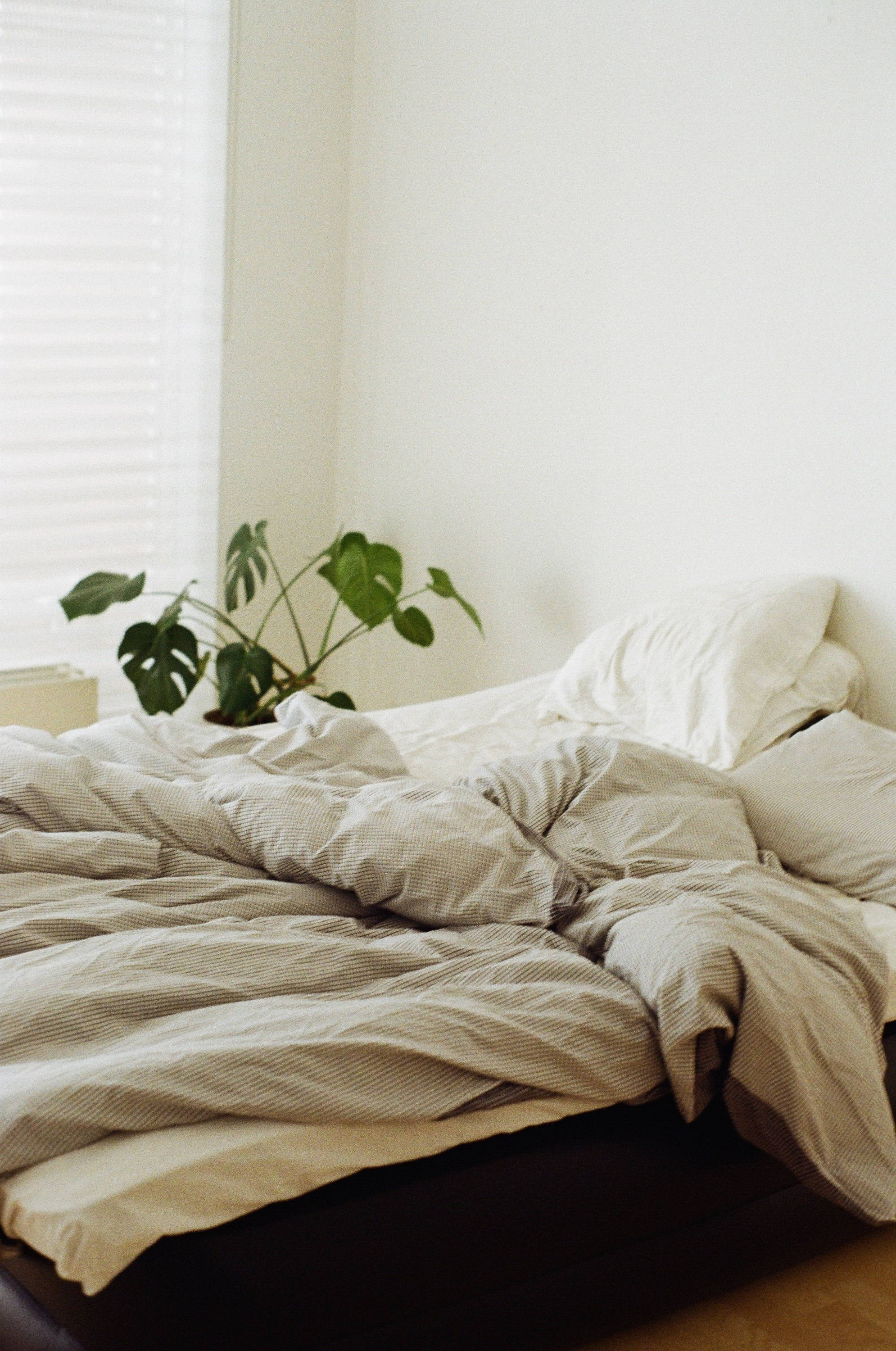 Messy bed with a plant at the corner - Photo by Harry Page from Pexels