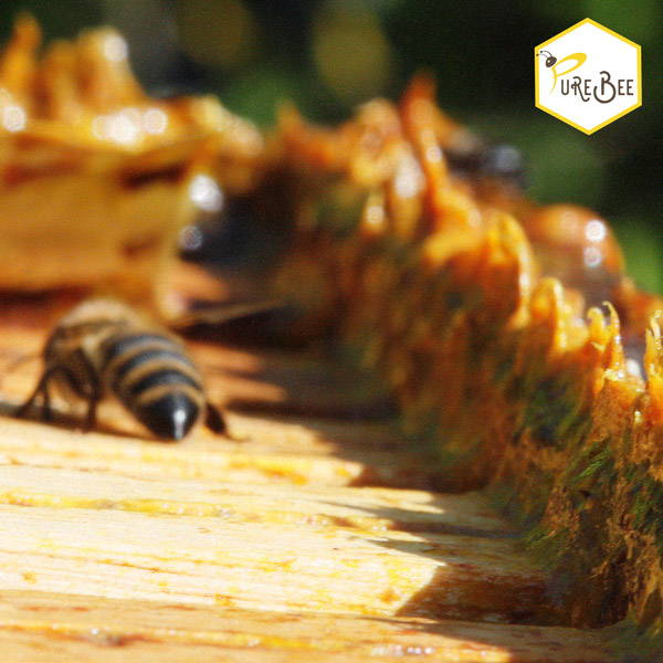 Propolis in the beehive closing gaps
