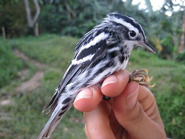 Juanita Sinisterra's Bird