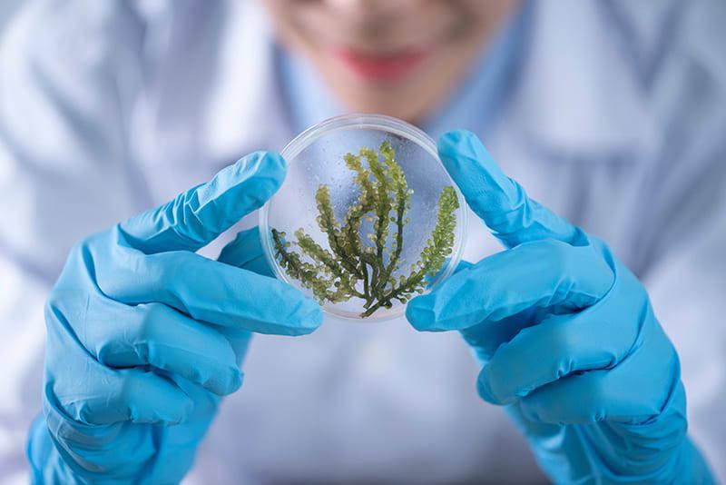 aktiv kressesalbe inhaltsstoffe