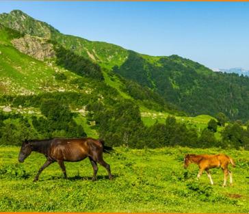 Альпийские луга Абхазии — маленькая Швейцария за 1 день