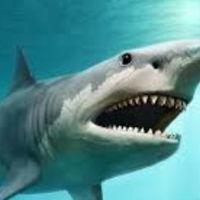 Sharky-Shark